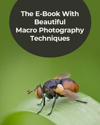 macro photography techniques