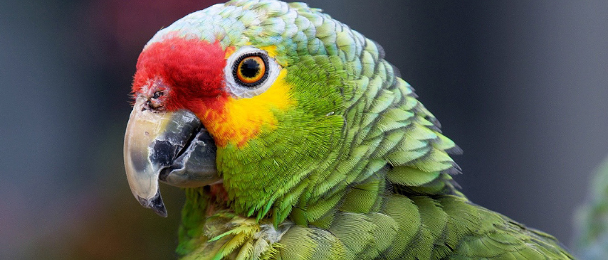 photo editor software PARROT AFTER 2