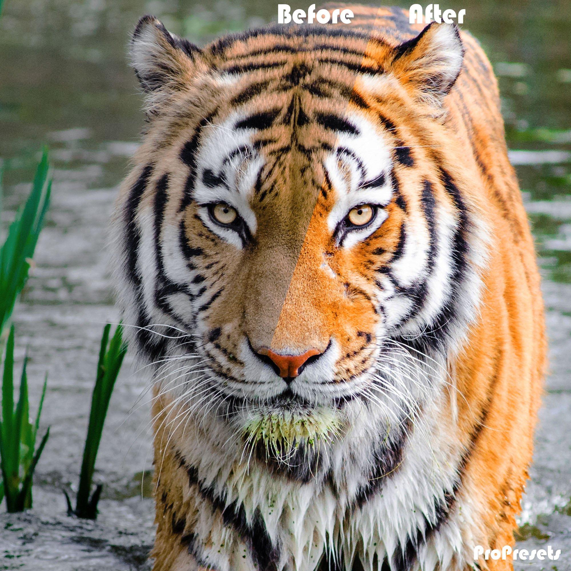 massive presets- TIGER