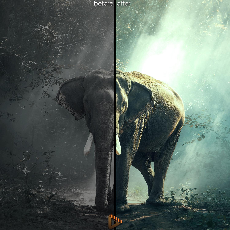 affinity presets elephant