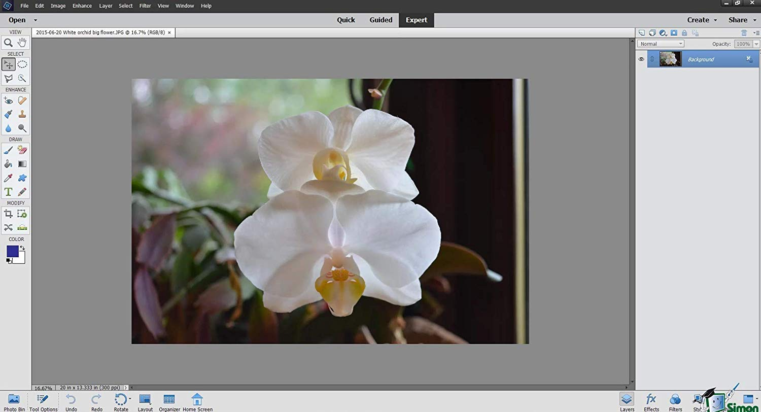 photoshop elements training