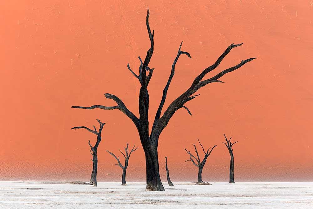 landscape photography tree