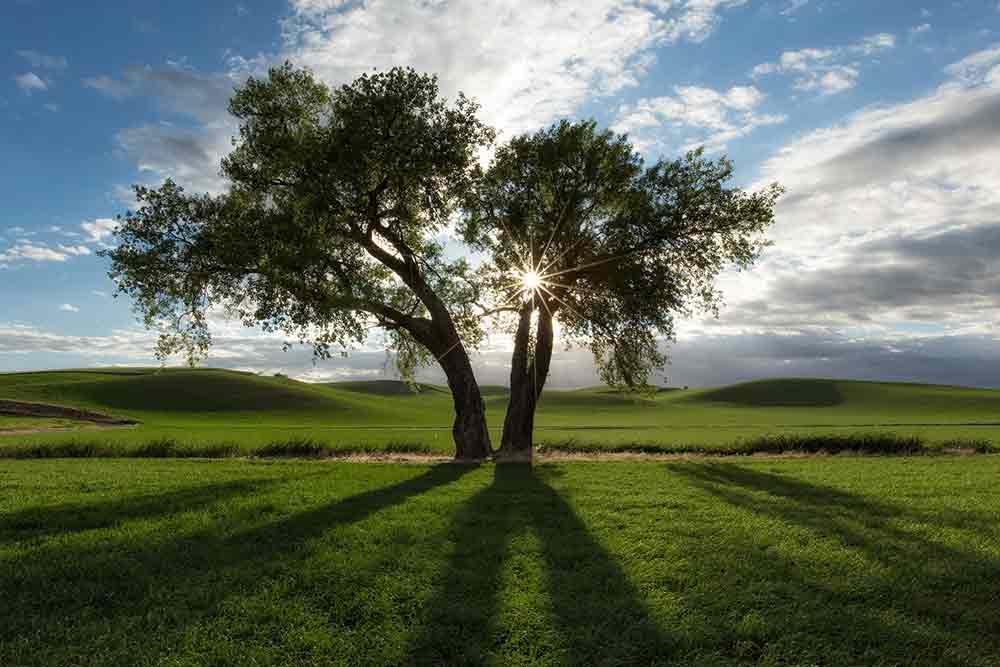 Tree Photo Landscape