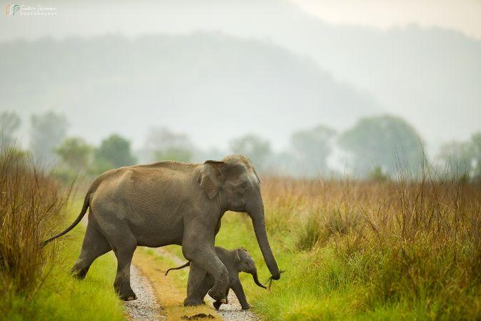 Elephant Photos