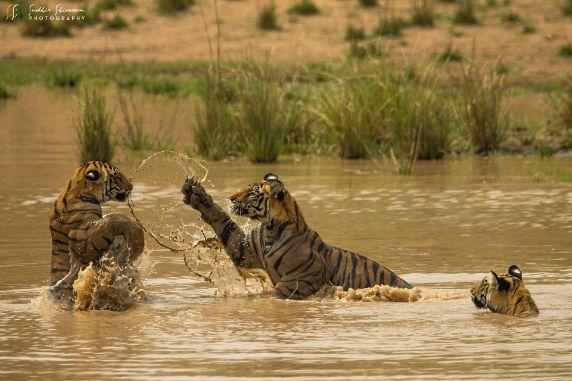 Wildlife Photography Courses Online